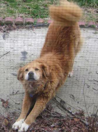 Grreat Dog Rescue
