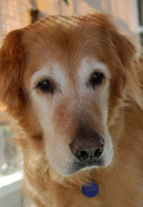 Jasper(08-130)