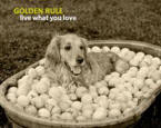goldenrule_small