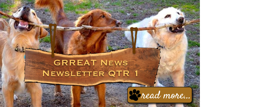 Grreat Golden Retriever Rescue Education And Training