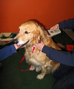 The dog is first scanned to look for an existing microchip.  If one is found, the chip is re-registered to GRREAT.