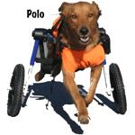 polo-sponsor